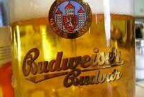 Budějovický Budvar loni vyvezl rekordní objem piva